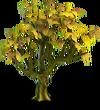 Apple tree dry