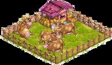 Yard cows
