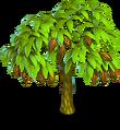 Cocoa tree 2