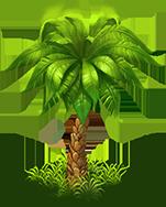 Palm green 1