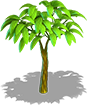 Cocoa tree small