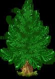 Fir green 2
