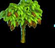 Cocoa tree 1