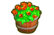 SHOP FLOWERBED 6