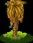 Palm dry