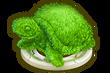 SHOP BUSH TURTLE