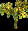Cocoa tree dry