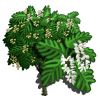 Giant Japanese Fern Tree-icon