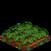 Strawberries-66