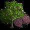 Sugar Apple Tree-icon