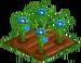 Blue Daisy 66