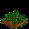GreenTea-66