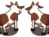 Cow (disambiguation)