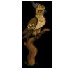 Javan Hawk Eagle-icon