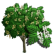 Japanese Fern Tree-icon