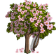 Summer Cherry Tree-icon