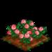 English Rose 100