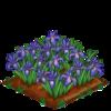 Iris extra100