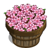 Cherry Blossom Bushel-icon