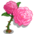 Damask Rose-icon
