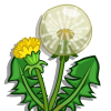 Dandelion-icon