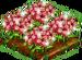 Garnet Poppy extra100