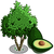 AvocadoTree