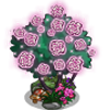 Fairy Roses-icon