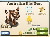 Australian Mini Goat