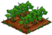 Green Bean 66
