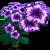 Purple Petunia Full Bloom-icon