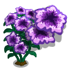 Purple Petunia Full Bloom-icon