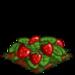 Super Strawberry 100