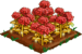 Red Chrysanthemum 100