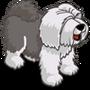 Sheep Dog Adult Gray-icon