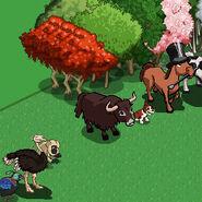 Yak on farm