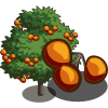 Persimmon Tree-icon