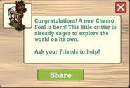 Charro foal message