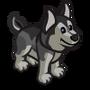 Husky Puppy-icon