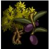 Olive Tree-icon