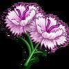 White Dianthus-icon