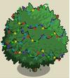 Alma Fig Tree5-icon