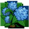 Hydrangea Full Bloom-icon
