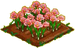 Saffron Crocus 100