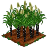 SugarCane-bloom