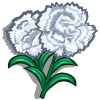 White Carnation-icon