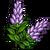 Licorice Plant-icon