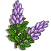 Licorice Plant-icon