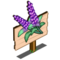 Sage Mastery Sign-icon