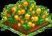 Sandersonia Flower 100